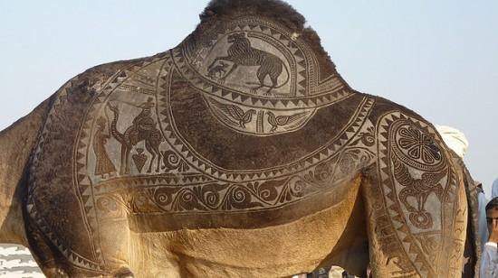 Bikaner-camel-festival-550x308.jpg