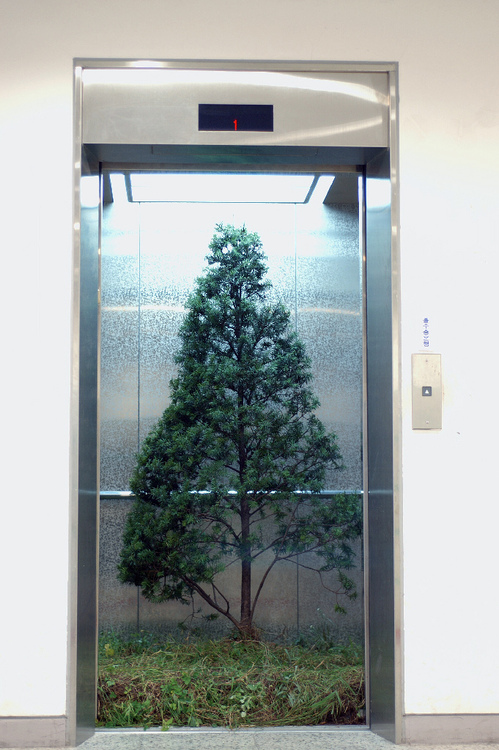 TreeElevator.jpg