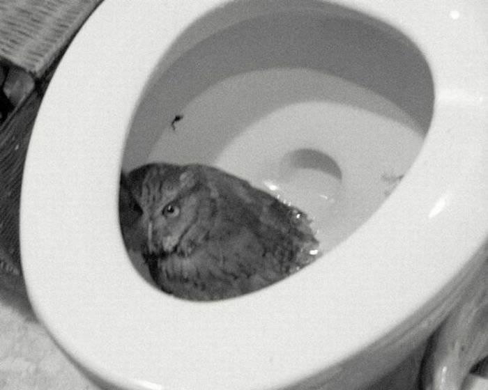 Toilet-Owl.jpg