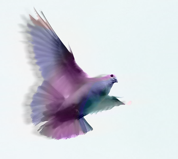 DOVES.png