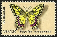 OregonSwallowtail.jpeg