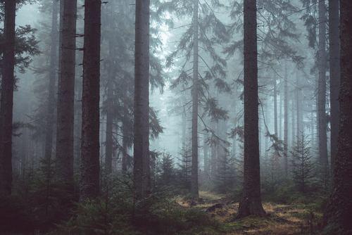 pixeltalker3-forest